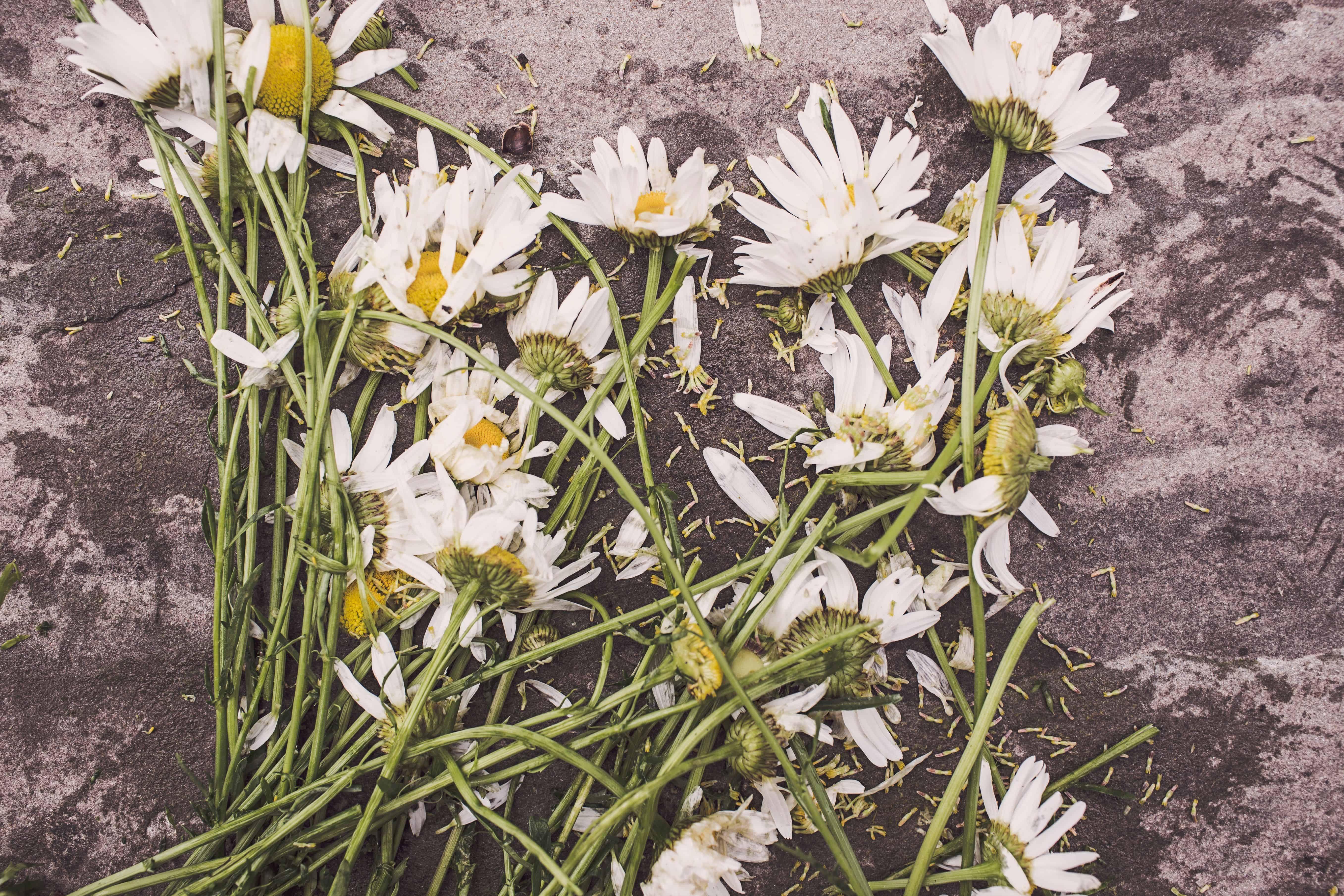 afrontar la pérdida de un ser querido o el duelo